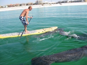 Paddle Boarding Waterfront Venice Florida